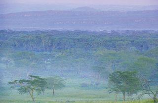 Kenia co w buszu piszczy
