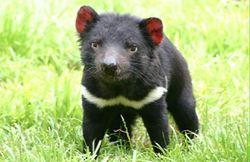 Odkrywanie Tasmanii