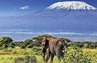 Kenijskie Trio + pobyt w hotelu Scorpio Villas