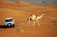 Emiraty - złoto pustyni